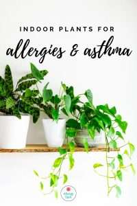 Read more about the article Enjoy beautiful greenery inside: indoor plants for allergies and asthma